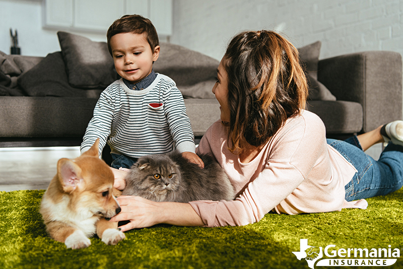 How To Prepare Your House To Make Your New Pet Feel At Home
