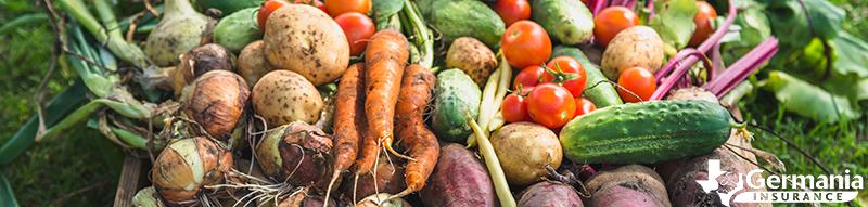 Légumes cueillis dans un potager intérieur.